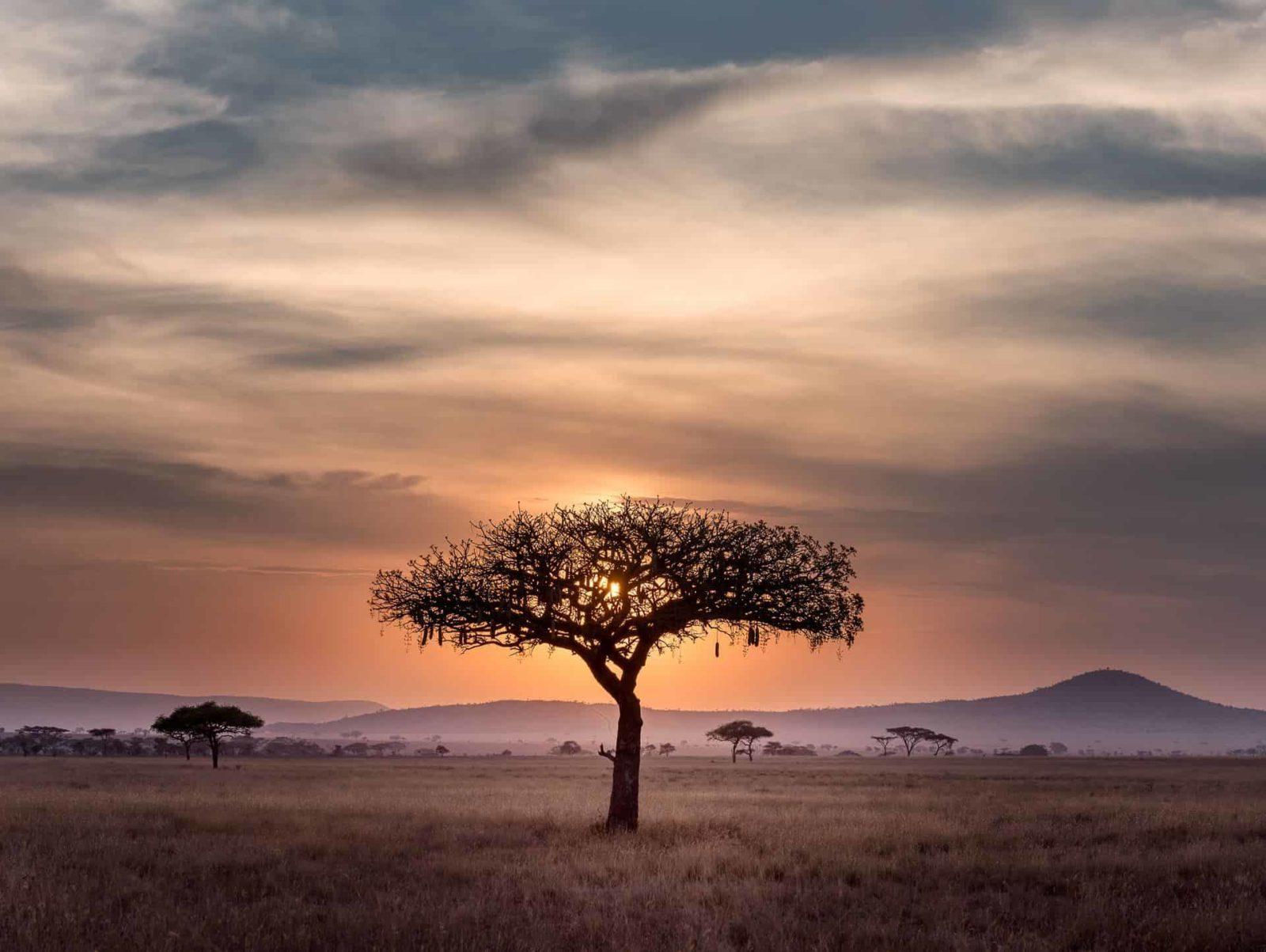 Coachen over grenzen heen: Better Minds goes Africa